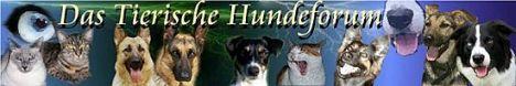 Das tierische Hundeforum