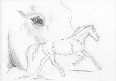 kostenlose pferde bilder