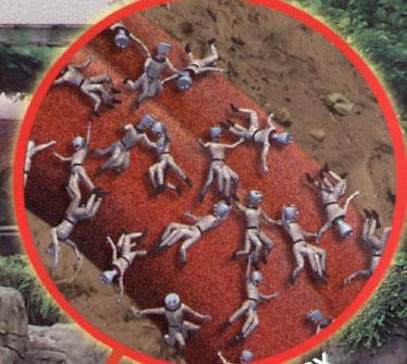Helmacronen auf Ameisenbärzunge (um einiges vergrößert)