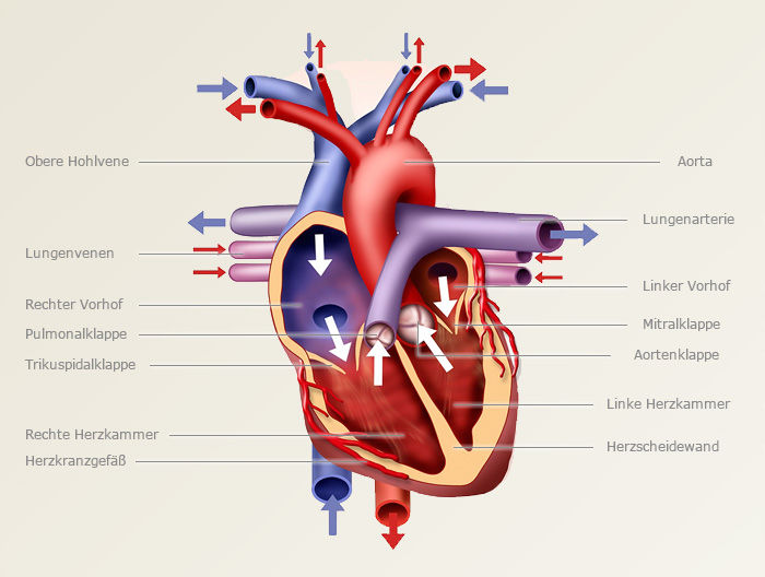 Altenpflegerhelfer/rin - LF 1.3.5 COPD
