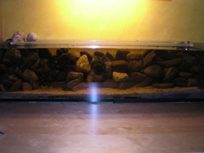 Aquaristikecke tanganjikaseebecken for Siamesischer kampffisch haltung
