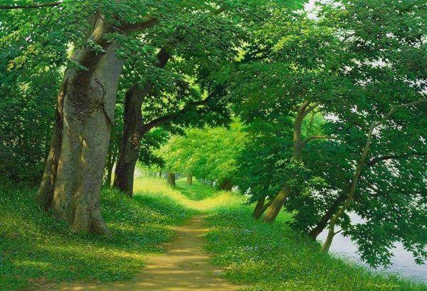 Art milenyum an jung hwan for Caracteristicas de arboles frondosos