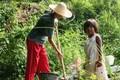Gardenwork