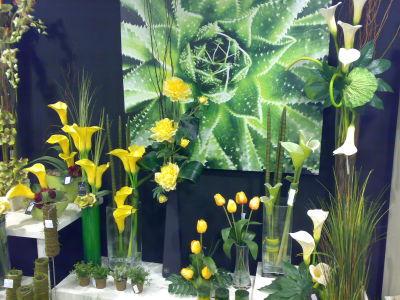 Baobab plantas y decoraci n granada decoraci n artificial for Granada interiorismo y decoracion