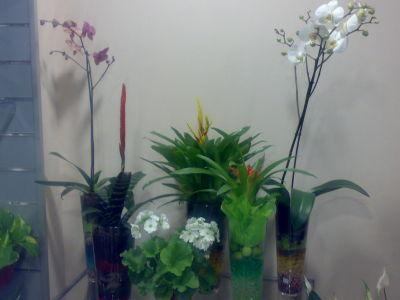 Baobab plantas y decoraci n granada plantas naturales for Granada interiorismo y decoracion