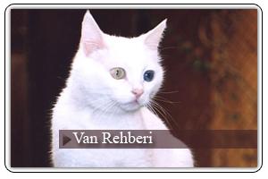 Van Rehberi Sayfamız Açıldı....