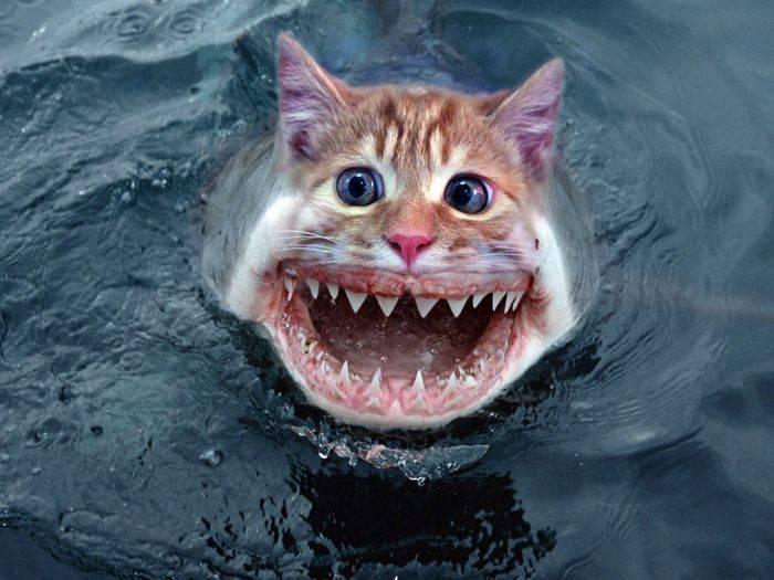 Crazy Katze