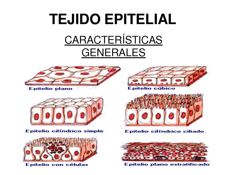 biologiahumanatercerodos