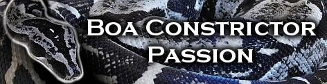 www.boa-constrictor-passion.de.tl