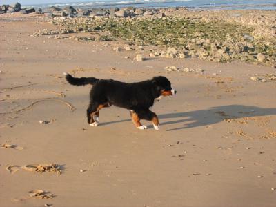 16-02-2008 : découverte du sable et de la mer : tout un programme !