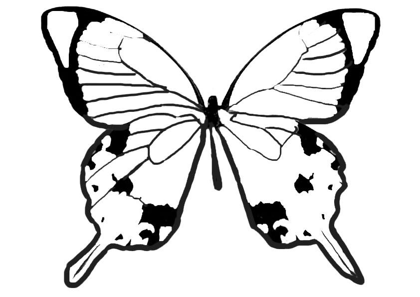 Dreamland Schmetterling