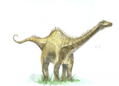 apatosaurus vs diplodocus - 870×629