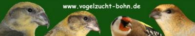 http://www.vogelzucht-bohn.de