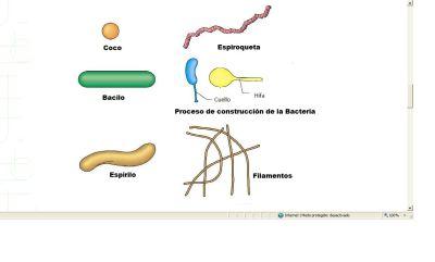 Celulas Alargadas