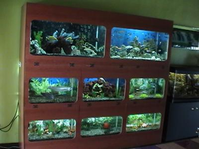 Acuariofilia mi pasi n inicio for Mueble acuario