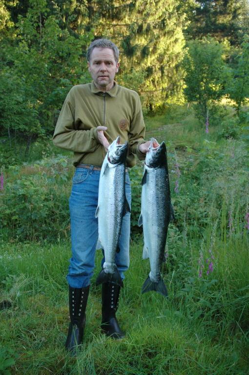 Inge Sandven med to flotte laksar på 4.5kg og 5.5kg. Laksane vart tatt i Dalebrua 5.Juli. Foto: Ole R Sandven