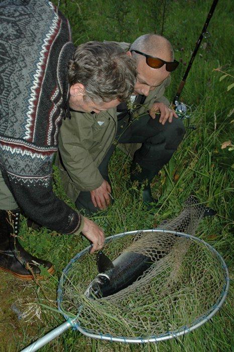 Det var ein flott fettfinneklypt holaks på 5,7kg, fisken vart teke inn til stamfisk. Foto: Arne R Sandven