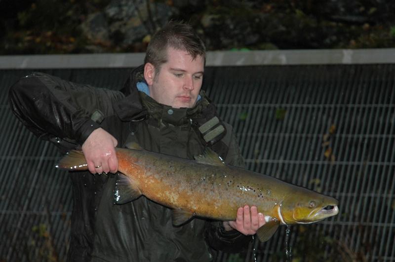 Roald Kvamme med ein mellomlaks under stamfisket. Foto: Arne R Sandven