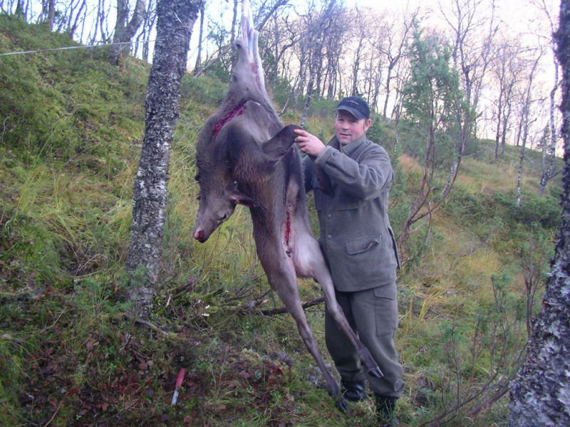 Idar Tveiterås igang med slaktinga. Foto: Harald Lyngmo