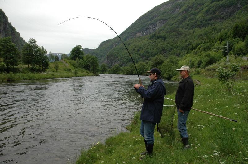 Stamfiske i midten av juni 2005 gav gode resultat. Her er det kjøring av fisk i Båthølen. Foto: Arne R Sandven