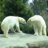 Zoo Search at www.davidedisongames.page.tl