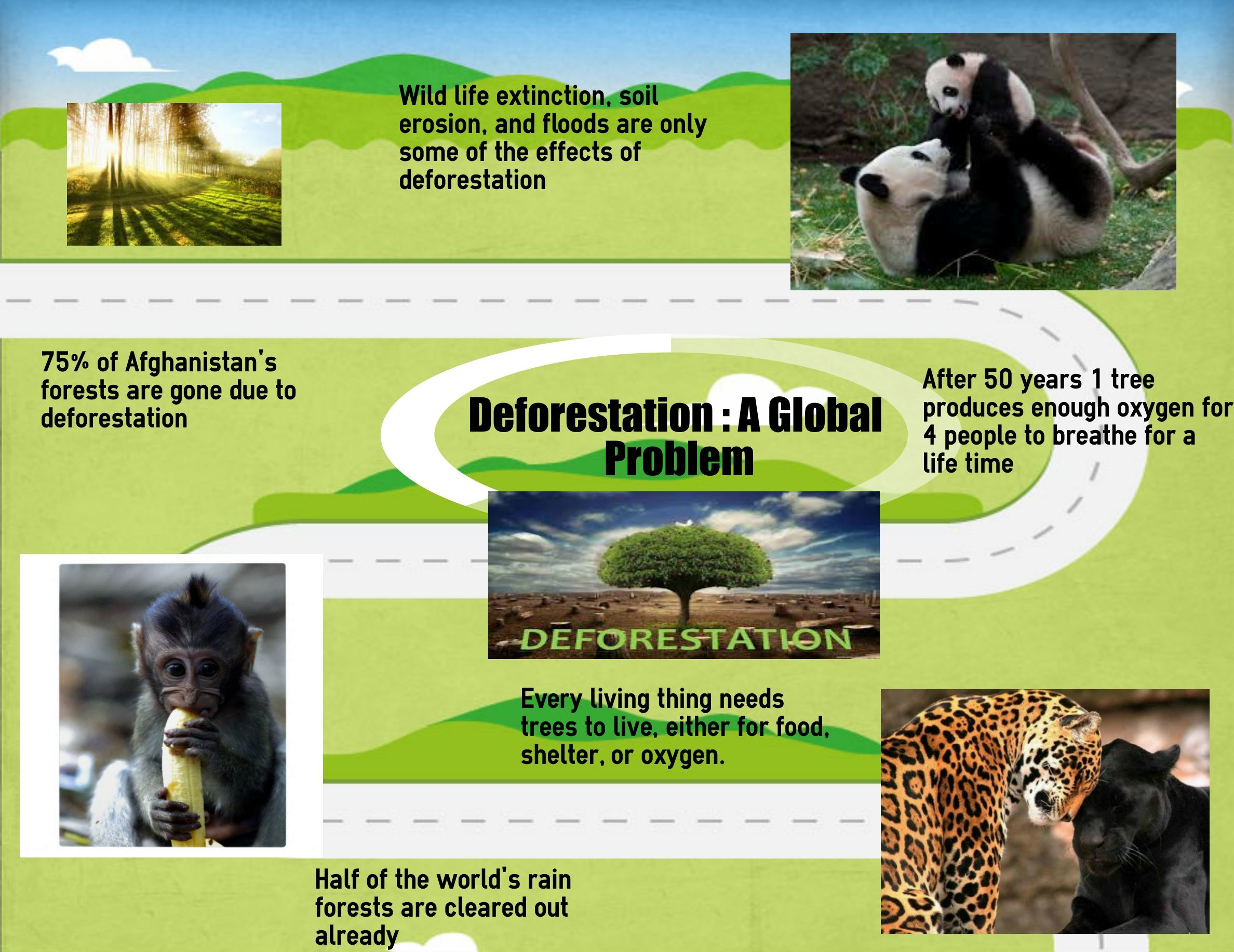 wild life extinction solutions On this platform you can find all the latest information related to nature and wildlife conservation in myanmar endangered species  solutions these include.