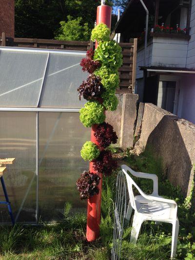 diefflen ist das geilste dorf der welt der salatbaum 2 0. Black Bedroom Furniture Sets. Home Design Ideas