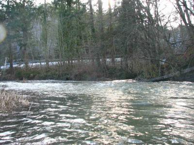 Dreisbachmündung oberhalb des ins Wasser gefallenen Baumes