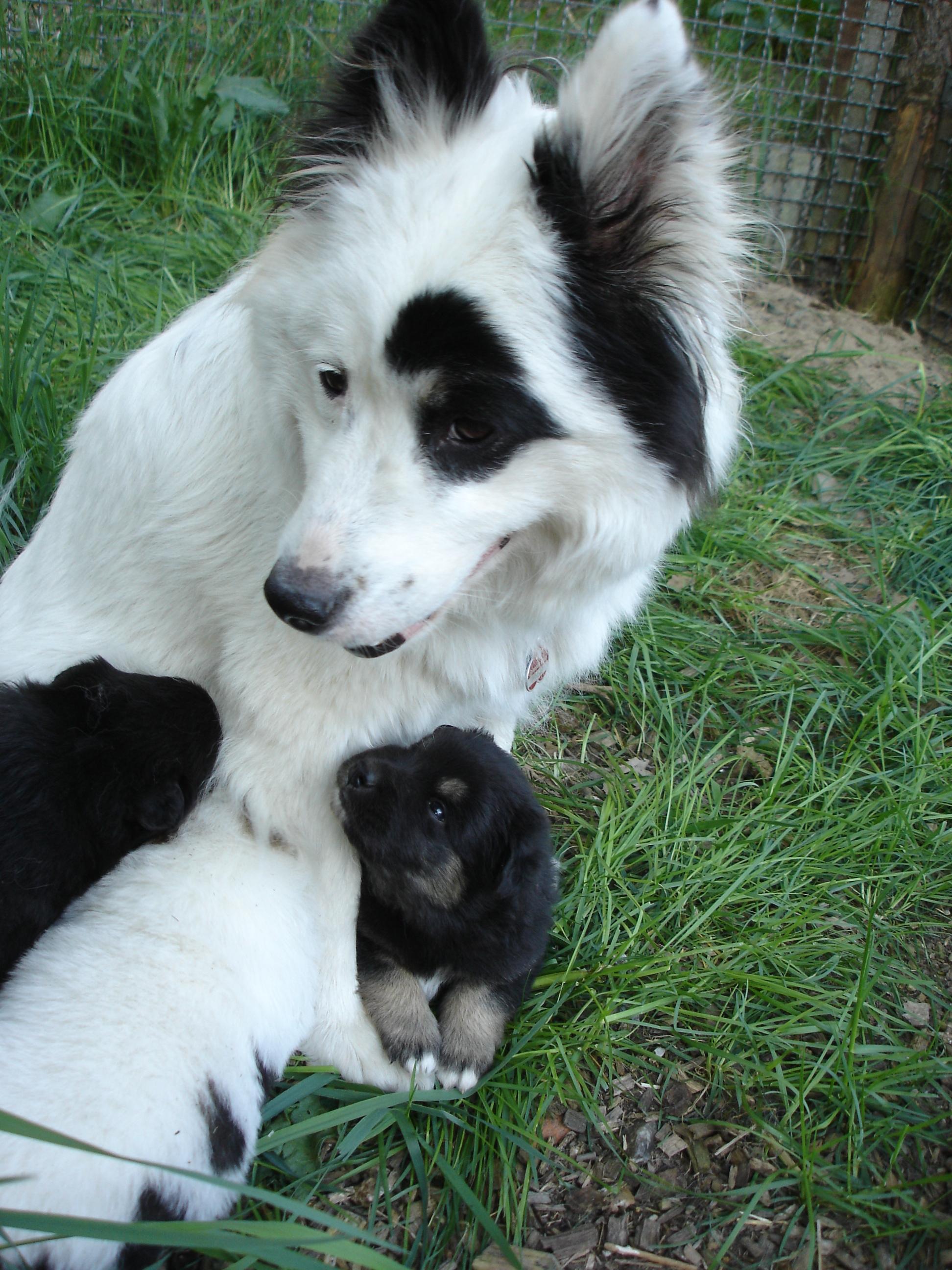 Mama Enya