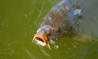 Extreme carpfishing richtig f ttern for Was fressen teichfische