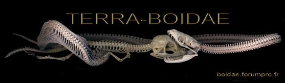 Terra-boidae