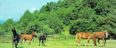 Pferde auf der Koppel von Beates Ferienhof