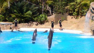 Loro Parque; Delphin-Show