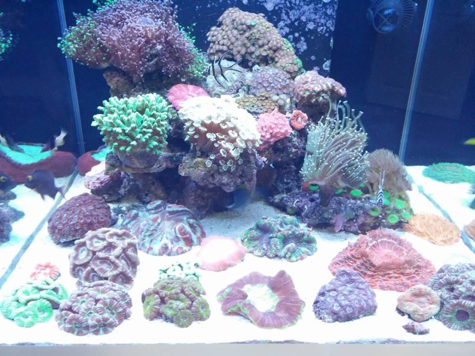 Deniz, resif, mercan akvaryumu