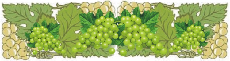 winogrono 1