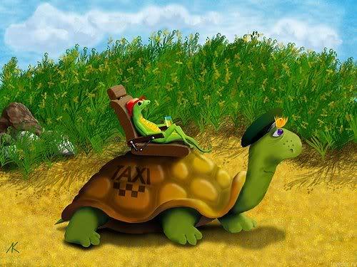 żółwie tortue