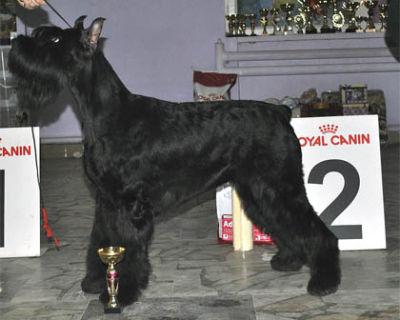2 место BIG-II