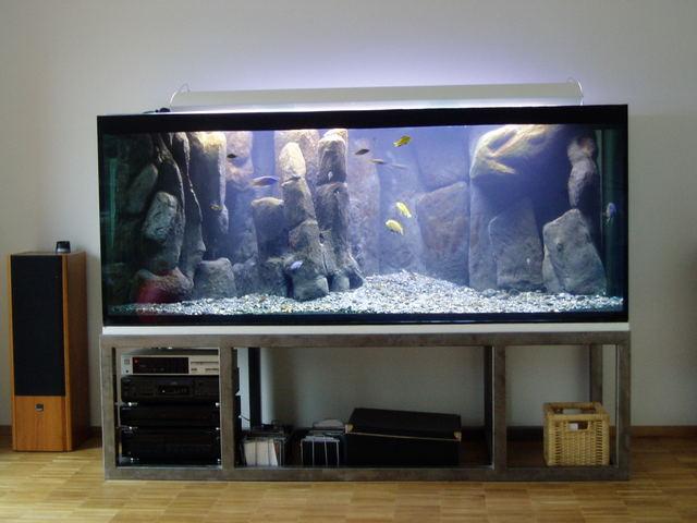 frank 39 s malawisee cichliden galerie. Black Bedroom Furniture Sets. Home Design Ideas