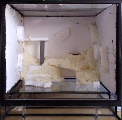 frogworld terrarium einrichtung. Black Bedroom Furniture Sets. Home Design Ideas