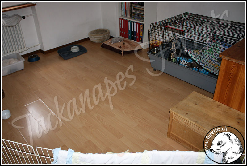 jackanapes frettchen frettchenz chter schweiz k fig u ausstattung. Black Bedroom Furniture Sets. Home Design Ideas