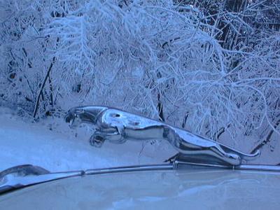 Jaguar des neiges (un peu incompatible)
