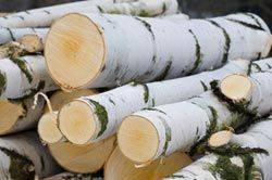 drewno kominkowe gdańsk