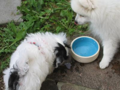 Filou und Kira