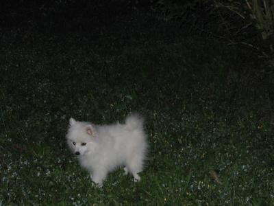 Das ist jetzt Kira, mitten in der Nacht...