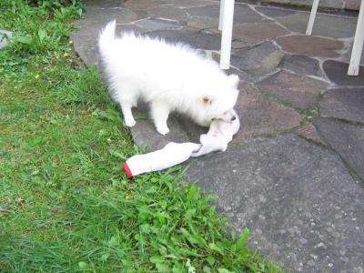 Ich spiele im Garten mit menem Lieblings-spielzeug!