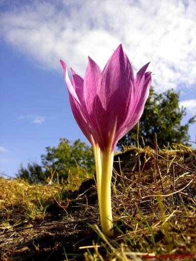 Köylülerin ''Kestane Çiçeği''dedikleri güzellik...