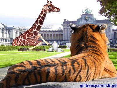 girage et tigre