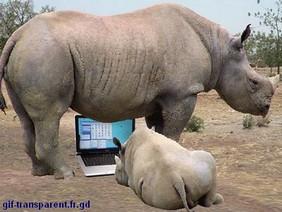 bébé rhino informaticien