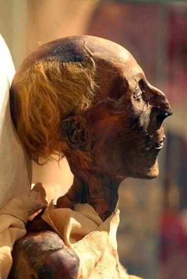 A hairy tale for Ramses II