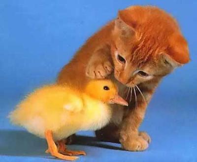 Ekim dünya hayvanlari koruma günüdür